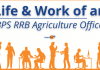 Life of an IBPS RRB Scale 2 Agriculture Officer- Job Profile and More.