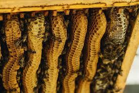 Ixam Bee